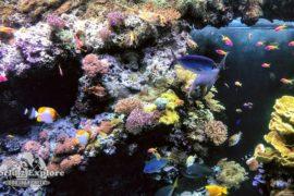 океанографският-музей-монако