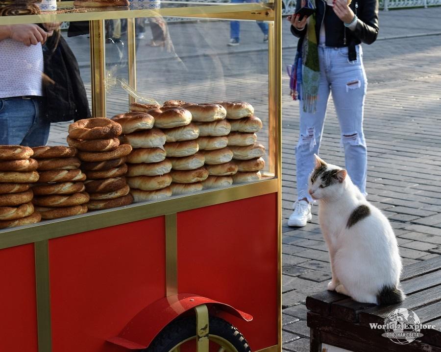 котетата-истанбул